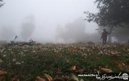 فصل برداشت کندوس جنگلی.منطقه چلاو